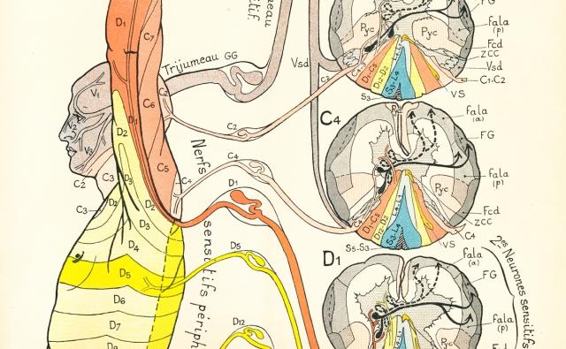 Semiologie des affections du système nerveux | Joseph Jules Dejerine (1849-1917)