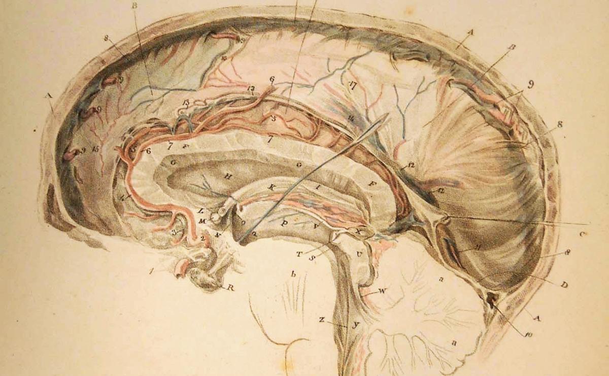 Historia de la neuroanatomía